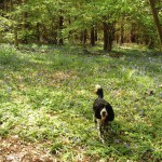 Max enjoying Oakley Wood