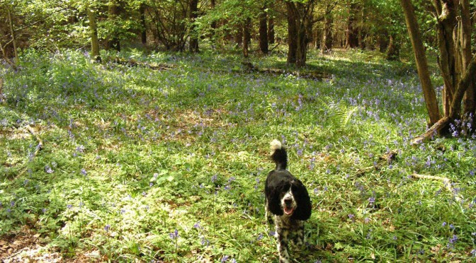 Max enjoying Oakley Wood